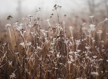 Campo congelato fotografia stock libera da diritti