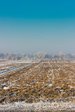 Campo congelato nel Kirghizistan Immagine Stock Libera da Diritti