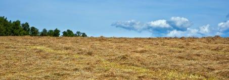 Campo cosechado del heno con las nubes y los árboles competentes Fotos de archivo