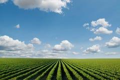 Campo cultivado Imagem de Stock Royalty Free