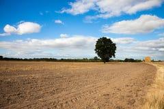 Campo cultivado Fotografía de archivo libre de regalías