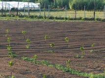 Campo cultivado Foto de Stock Royalty Free