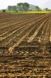 Campo cultivado Fotografía de archivo