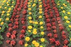 Campo cultivado con las flores Fotos de archivo libres de regalías