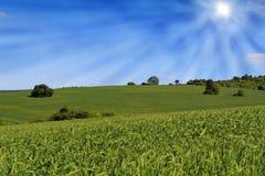Campo cultivado dos fazendeiros fotos de stock