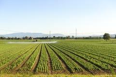Campo cultivado em Emilia-Romagna foto de stock