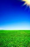 Campo cultivado maravilhoso da soja em o início do verão. Fotos de Stock Royalty Free