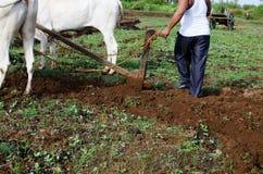 Campo d'agricoltura e d'aratura con i buoi Immagine Stock Libera da Diritti