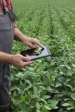 Campo d'esame delle piante di fagiolo della soia dell'agricoltore Fotografie Stock