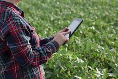 Campo d'esame delle piante di fagiolo della soia dell'agricoltore Fotografie Stock Libere da Diritti