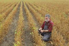 Campo d'esame delle piante di fagiolo della soia dell'agricoltore Immagine Stock