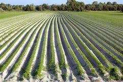 Campo da agricultura Fotos de Stock Royalty Free