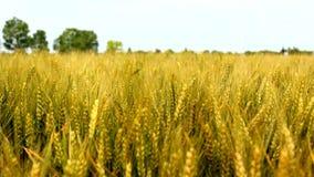 Campo da agricultura filme