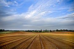 Campo da alface Fotografia de Stock