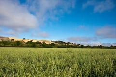 Campo da alfalfa Imagem de Stock