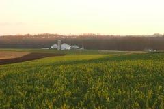 Campo da alfalfa do outono imagem de stock