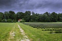 Campo da alfazema Foto de Stock