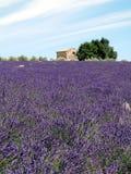Campo da alfazema com vertente Foto de Stock Royalty Free