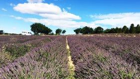 Campo da alfazema durante o verão Imagem de Stock Royalty Free
