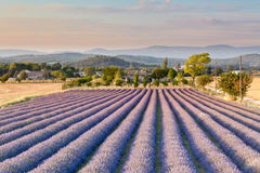 Campo da alfazema em Provence imagens de stock royalty free