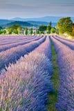 Campo da alfazema em Provence imagens de stock