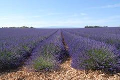 Campo da alfazema, provence Foto de Stock