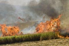 Campo da cana-de-açúcar no fogo fotografia de stock