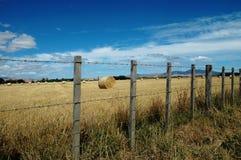 Campo da cerca e do feno Fotografia de Stock