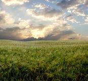 Campo da cevada durante o dia tormentoso imagem de stock