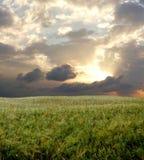 Campo da cevada durante o dia tormentoso fotos de stock