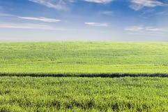 Campo da colheita Fotografia de Stock Royalty Free