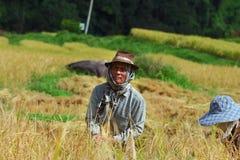 Campo da colheita Fotografia de Stock
