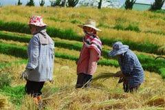 Campo da colheita Foto de Stock Royalty Free