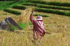 Campo da colheita Imagem de Stock