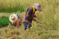 Campo da colheita Imagem de Stock Royalty Free