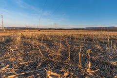 Campo da colheita Imagens de Stock Royalty Free