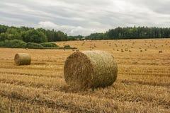 Campo da colheita com pacotes da palha Fotos de Stock