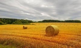 Campo da colheita com pacotes da palha Imagem de Stock Royalty Free