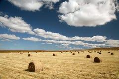 Campo da colheita com pacotes da forragem Foto de Stock