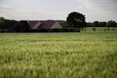Campo da colheita do trigo Fotografia de Stock