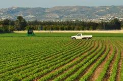 Campo da colheita verde em Chipre fotografia de stock