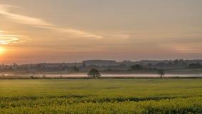 Campo da colza no nascer do sol da flor Imagens de Stock