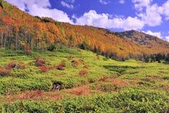 Campo da cor e do verde do outono Fotos de Stock