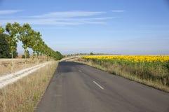 Campo da estrada e dos girassóis Imagens de Stock
