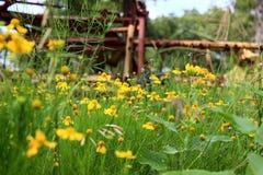 Campo da felicidade Fotografia de Stock Royalty Free