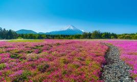 Campo da flor de cerejeira no festival de Japão Shibazakura com montagem fotografia de stock royalty free