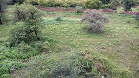 Campo da floresta Imagens de Stock