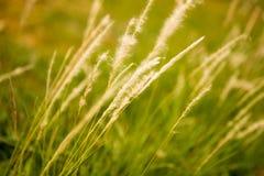 Campo da grama Imagem de Stock