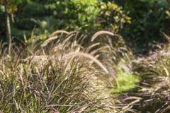 Campo da grama bonita Imagem de Stock