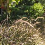 Campo da grama bonita Foto de Stock Royalty Free